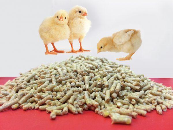 فرول دان مرغ گوشتی