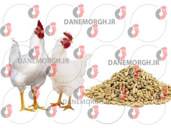 قیمت دان مرغ گوشتی
