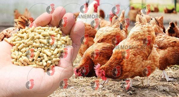 قیمت دان آماده مرغ گوشتی خرید دان آماده مرغ گوشتی تنوع دان آماده مرغ مزایای دان آماده مرغ گوشتی تولید دان آماده مرغ گوشتی خریداران عمده دان آماده مرغ صادرکنندگان دان آماده مرغ گوشتی