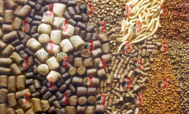 قیمت دانه پارس